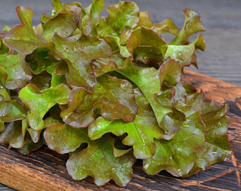 Lettuce Bronze Guard