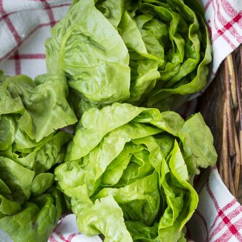 Lettuce Buttercrunch Organic