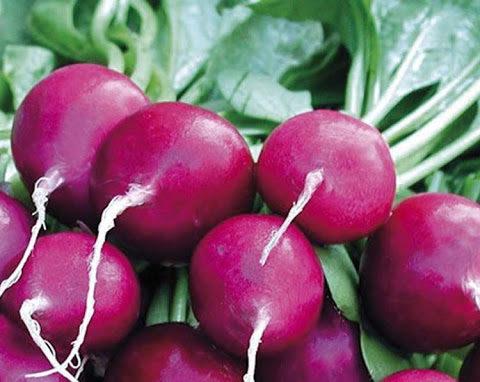 Radish Purple Plum