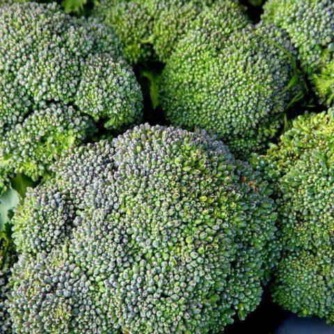 Broccoli Waltham