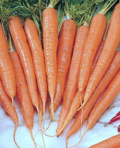 Carrot Imperator