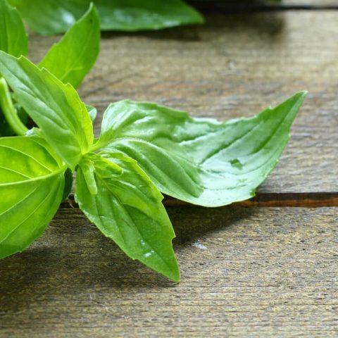 Herb Lemon Basil