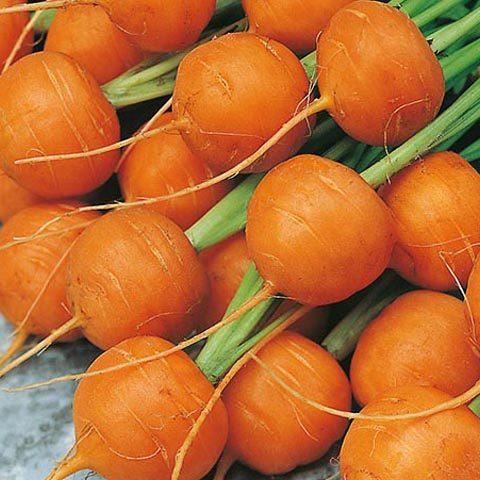 Carrot Parisian