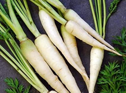 Carrot Lunar White
