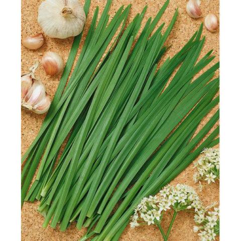 Herb Chives Garlic