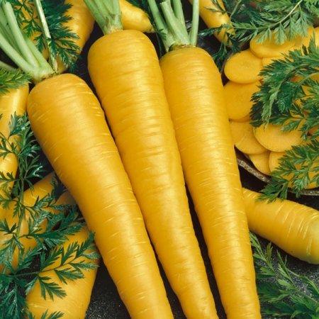 Carrot Yellow