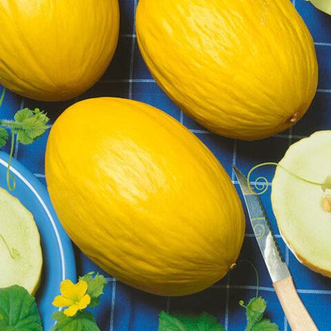 Melon Canary Yellow