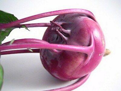 Kohlrabi Purple Vienna