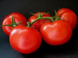 Tomato Ace