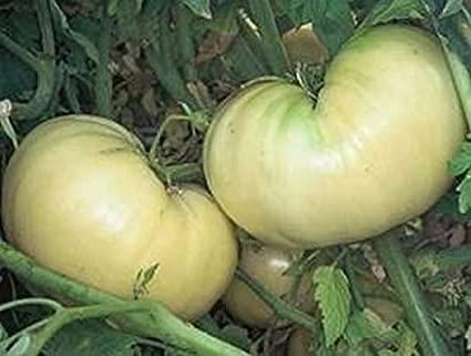 Tomato Great White