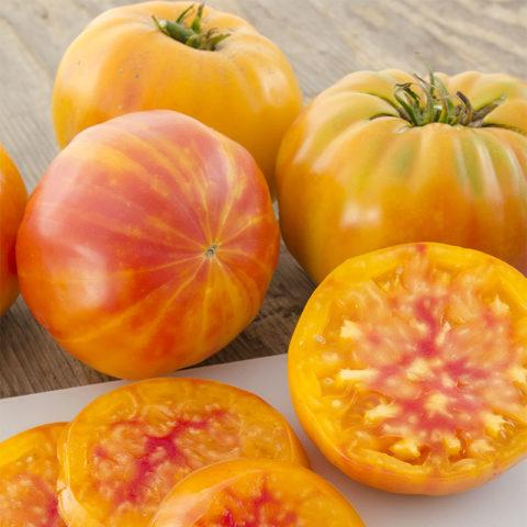 Tomato Big Rainbow