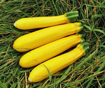 Zucchini Gold Rush